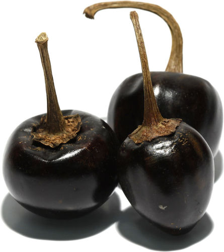 Chile cascabel - Piment cascabel